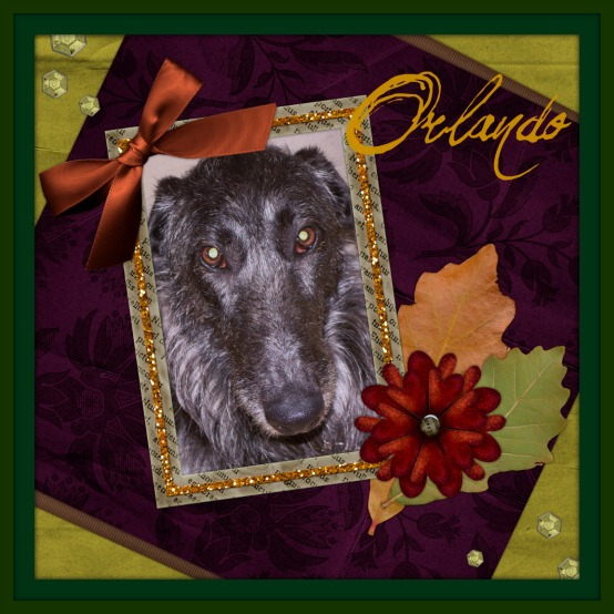 Deerhound,  Orlando