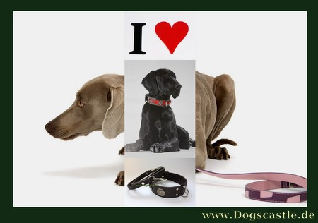 Dog Collars, Leather,